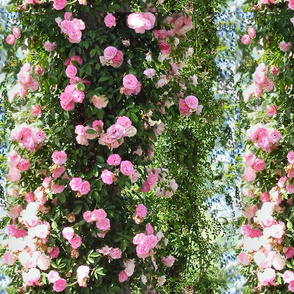 Climbing Roses Fabric & Wallpaper!