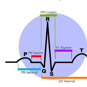 Cardiac Rhythm ST Segment