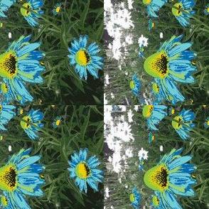 garden echinacea flower in blue green