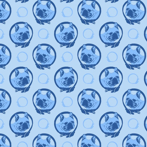 Collared French Bulldog portraits - blue