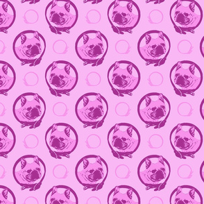 Collared French Bulldog portraits - pink