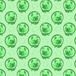 Collared French Bulldog portraits - green