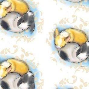 Sleeping Chihuahuas