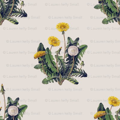 Dandelion on Vintage Cotton White