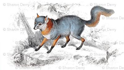 Rjardine_tri-coloured_fox_copy_preview