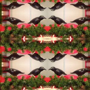 Crows in a Christmas wreath