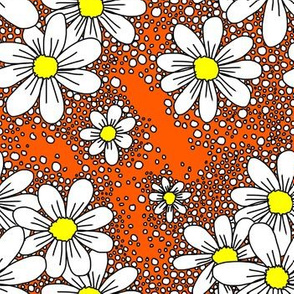 fresh daisies orange and white