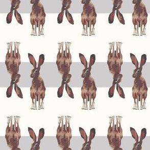 Jackrabbit Bunnies Bunny Rabbit
