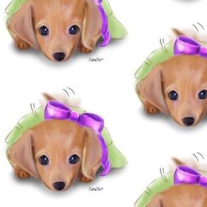 Dachshund Puppy White M