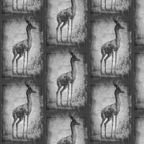 wallers gazzelle
