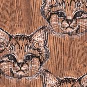 Oak Sand Cat