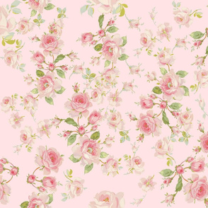 Saint Colette June Roses in peony pink