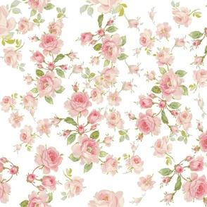 Saint Colette June Roses in peony pink on white