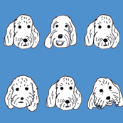 Spoodle faces blue
