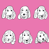 Spoodle faces fuschia