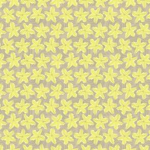 Zucchini Garden Sharp Yellow Flower Small