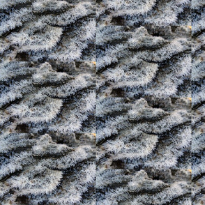 Wood Frost 1