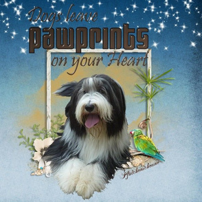 Bearded Collie - 002