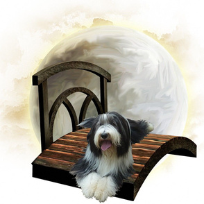 Bearded Collie - 008