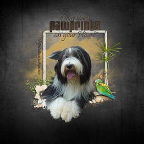 Bearded Collie - 009