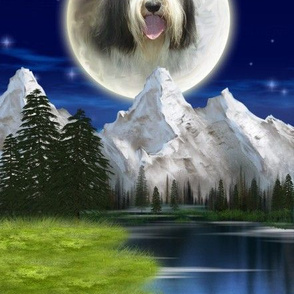 Bearded Collie - 010