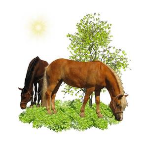 Horse - 004