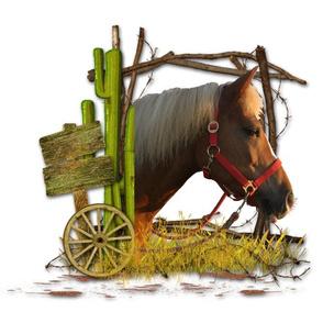 Horse - 007