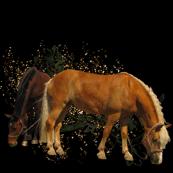 Horse - 011