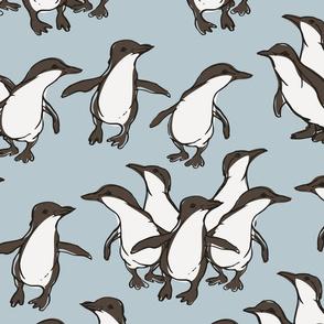 Fairy Penguin Parade