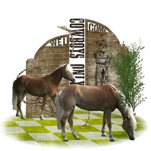 Horse - 013