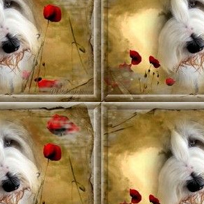 Bearded Collie - 014
