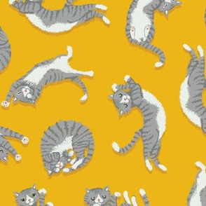 Grey Cats on Yellow