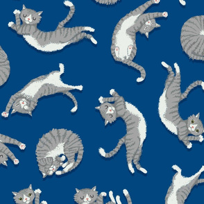 grey_cats_on_blue