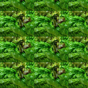 Lettuce_2-ed