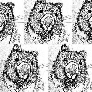 wombat_love