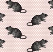 rats on pink dots