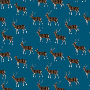 Deer Park HERD, Vintage on Petrol Blue