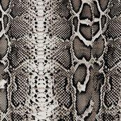 Snakeskin_shop_thumb