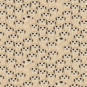 Meerkat - Suricata:  Mocha 100%