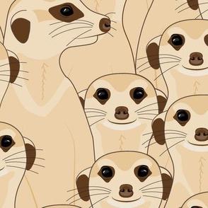 Meerkats - Suricata_400%
