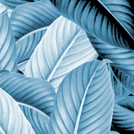 Palm In Palm ~ Profusion ~ Blue and White fabric by peacoquettedesigns on Spoonflower - custom fabric
