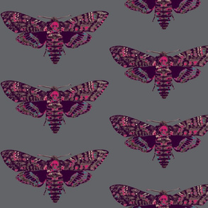 deaths head moth in pink