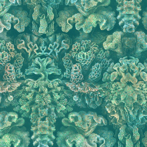 Haeckel Aquatica ~ Coral ~ Watermark