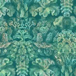 Haeckel Aquatica ~ Coral ~ Watermark