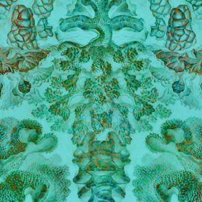 Haeckel Aquatica ~ Coral ~ Mars
