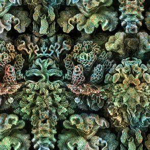 Haeckel Aquatica ~ Coral ~ Ocean Floor