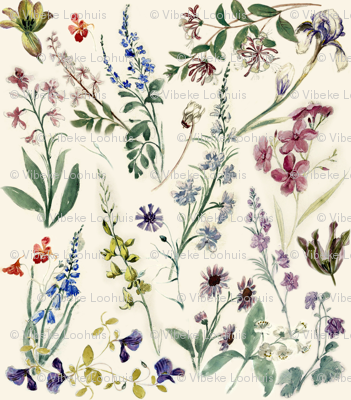 Flower sketches from the 17th century