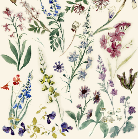 Flower sketches from the 17th century fabric by vib on Spoonflower - custom fabric