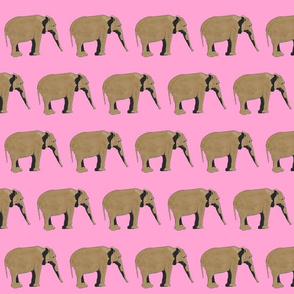 Elephant on pink