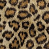 Etosha Leopard